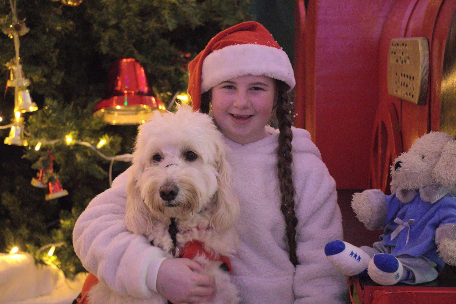 Pet therapy during Christmas
